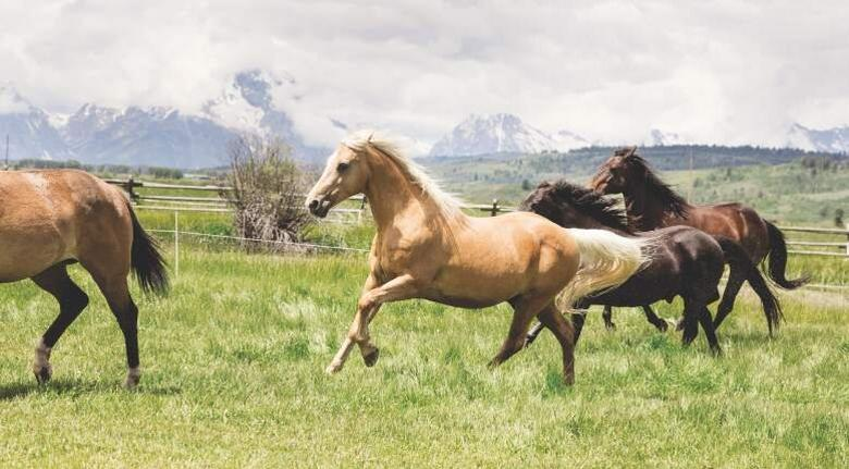 horses running in green field