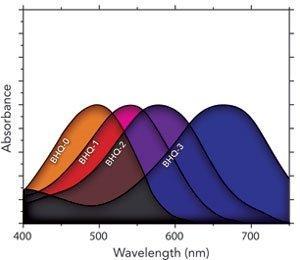 bhq absorption curves