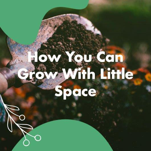 How You Can Grow With Little Space