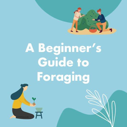 A Beginner's Guide to Foraging