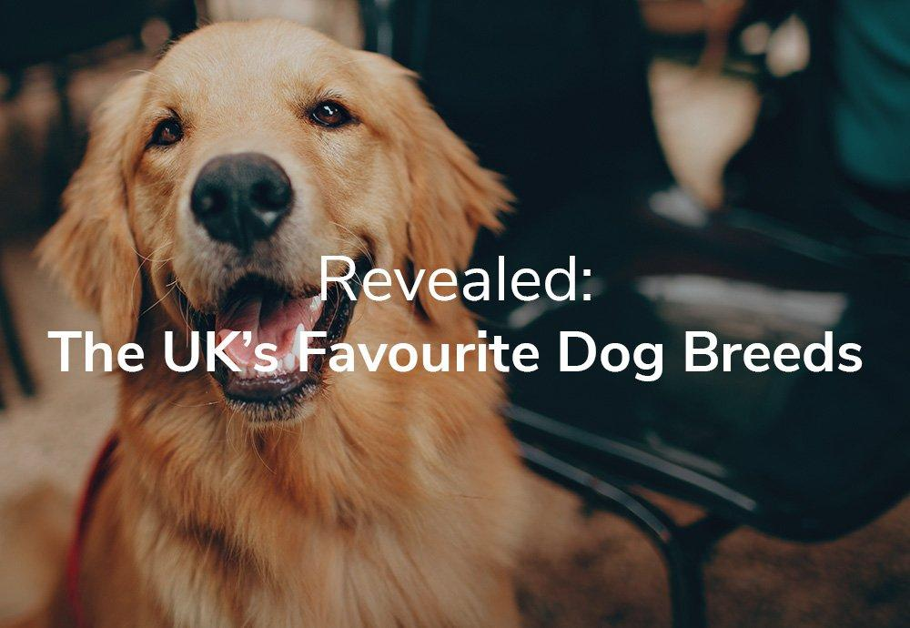 Revealed: The UK's Favourite Dog Breeds