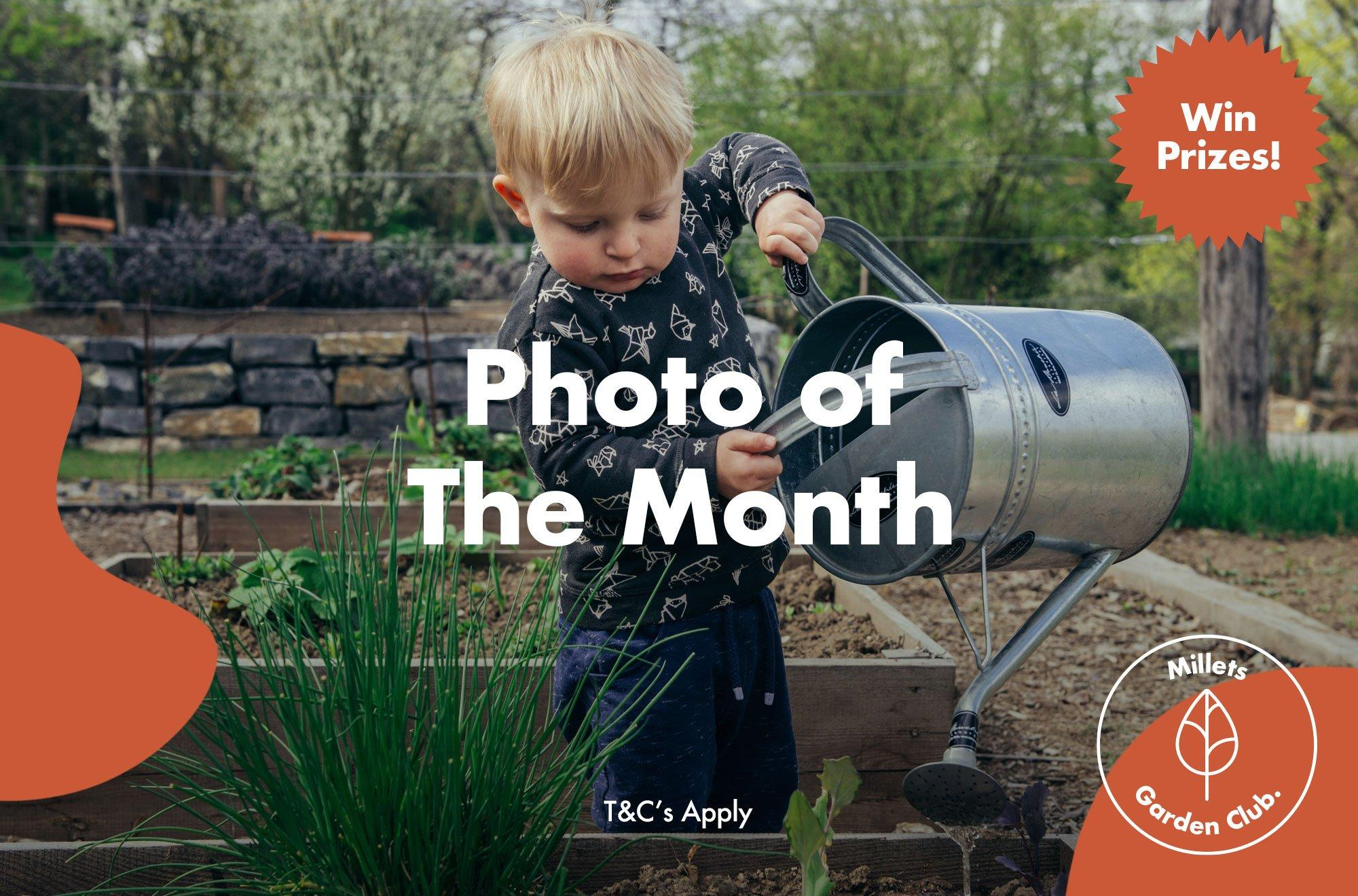 A picture of the Millets Garden Club Photo of the Month