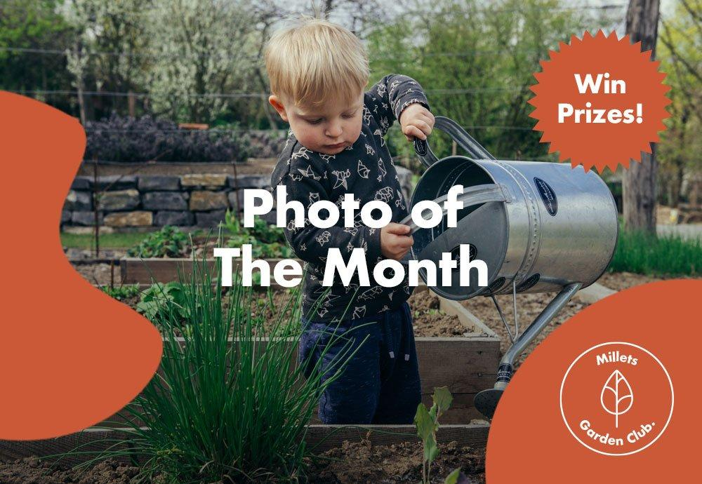 Millets Garden Club   Photo of the Month Competition