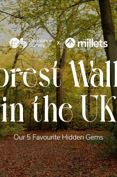Forest Walks in The UK: Our 5 Favourite Hidden Gems