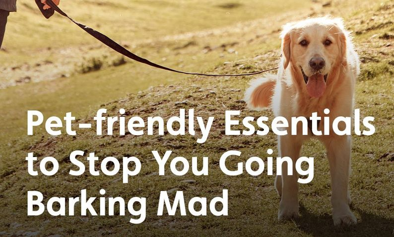 11 Mischievous Things Dogs Do Whilst Camping