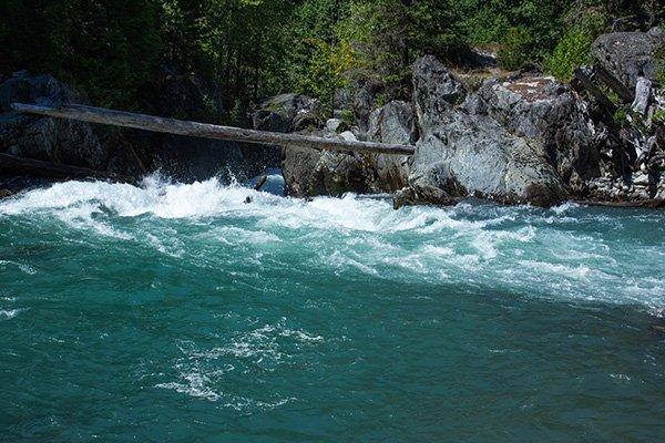 WildSwimmingBlog