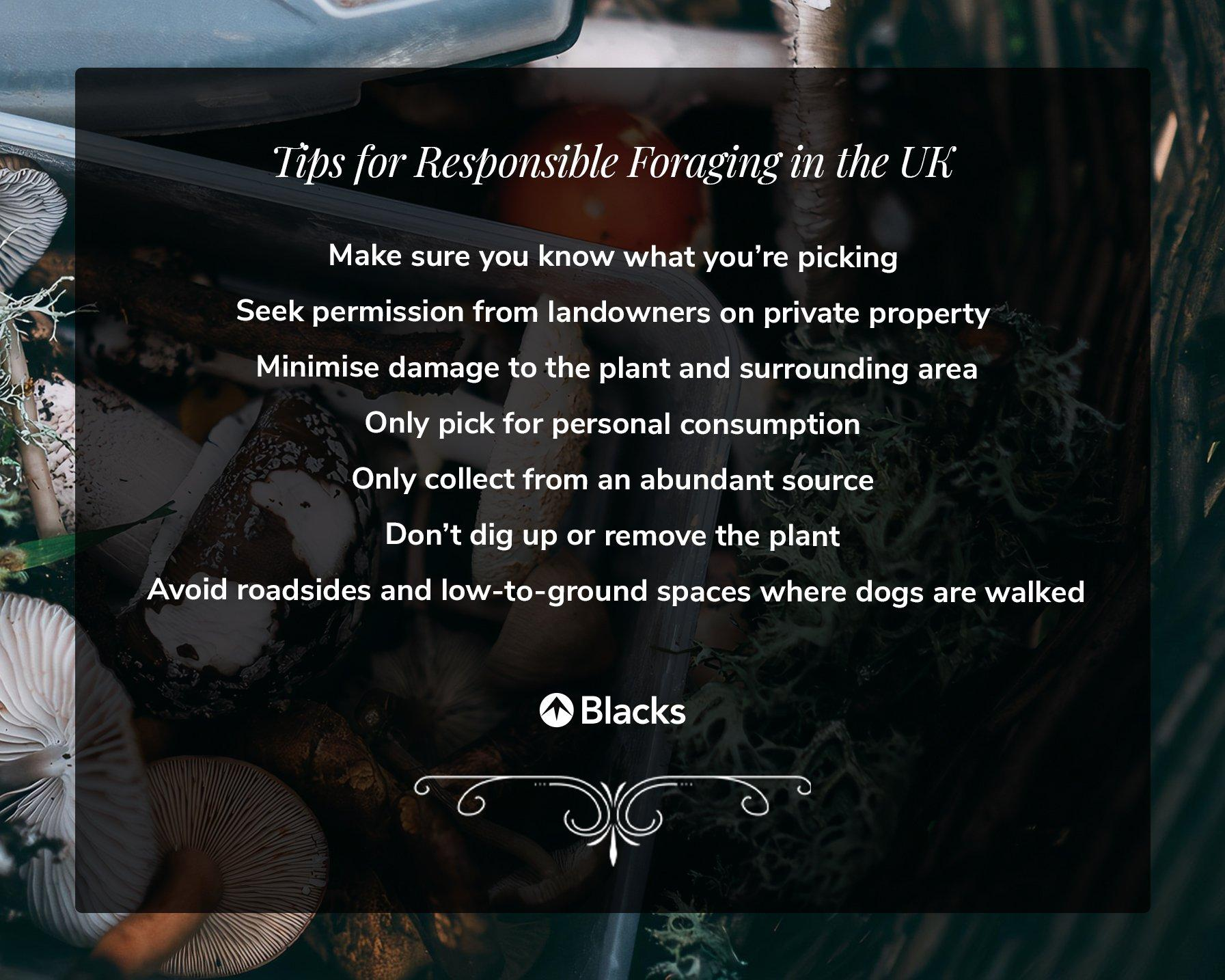 an infographic that details how to forage in the UK responsibly