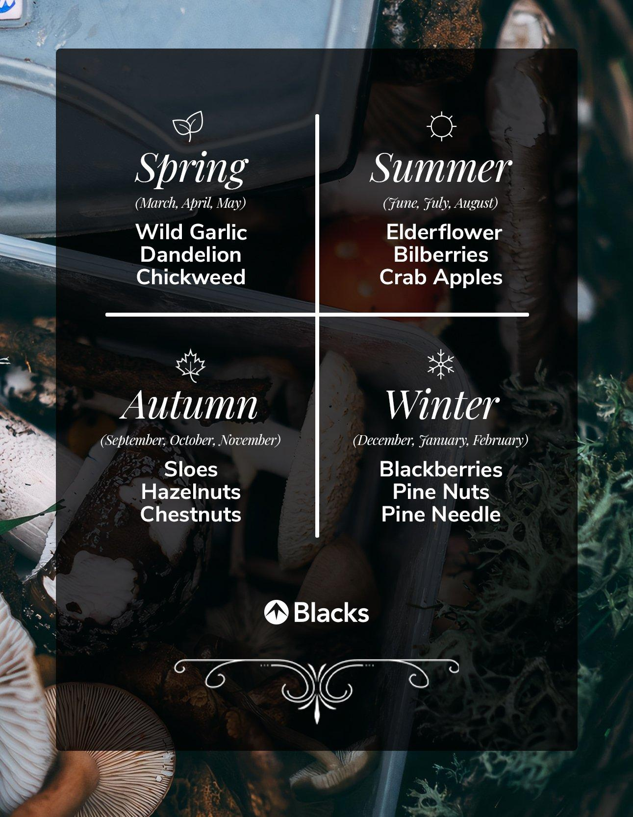 Foraging best picks for every season in the UK