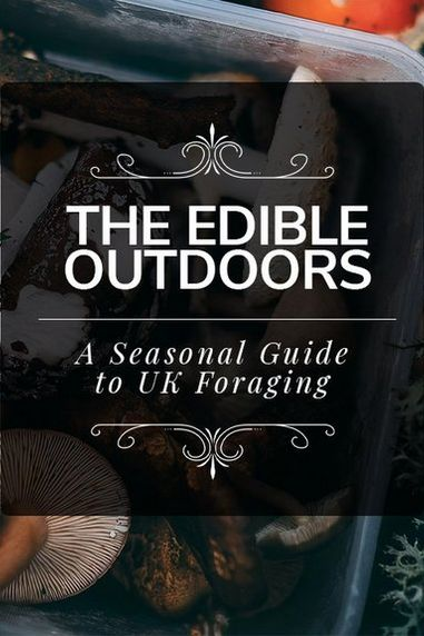 The Edible Outdoors | A Seasonal Guide to UK Foraging