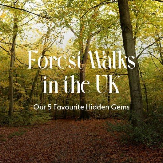 Forest Walks in The UK – 5 Hidden Gems
