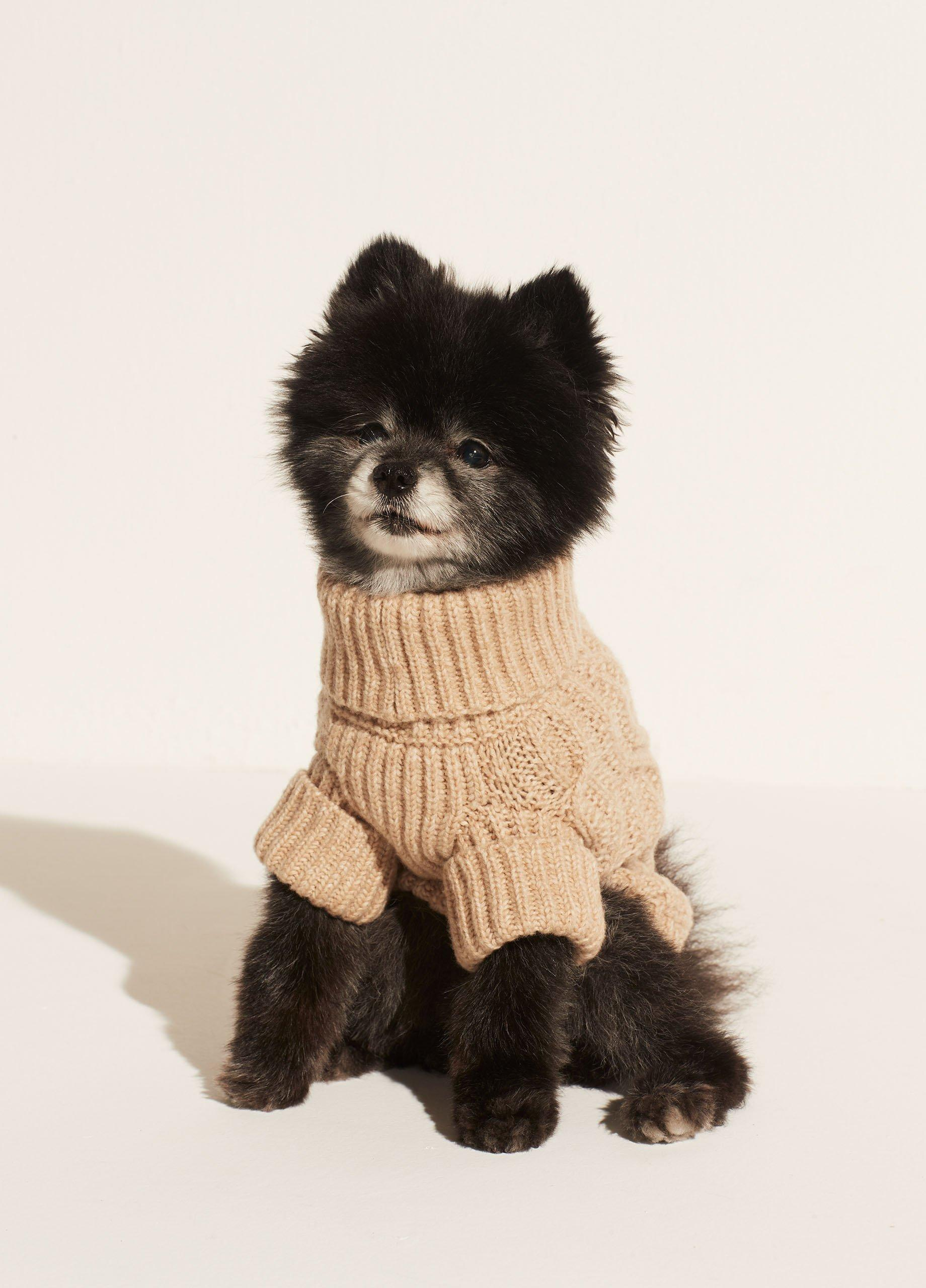Cable Knit Dog Sweater